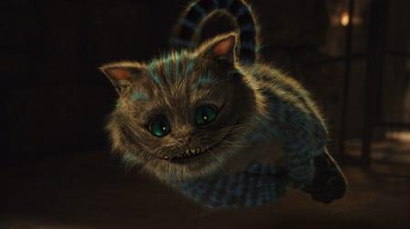 gatto frame