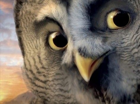 legend of the guardians the owls of gahoole ver8