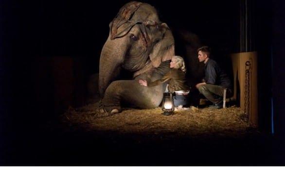 come acqua per gli elefanti08
