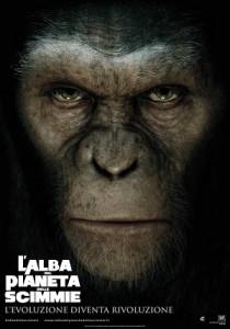 scimmia low
