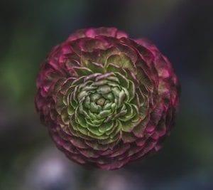 5 fiore