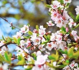 6 fiore
