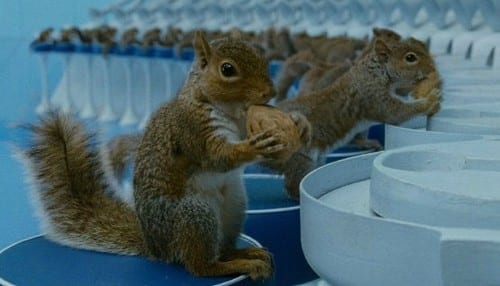 charlie chocolate factory squirrel 1